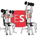 Ασκήσεις για Ώμους / Όλες οι ασκήσεις για δελτοειδείς για το γυμναστήριο ή το σπίτι με εικονογράφιση και αναλυτική περιγραφή βήμα προς βήμα