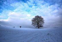 | a tree |