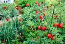 Garden / growing a garden