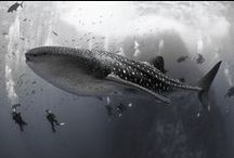 Diving: the underwater world