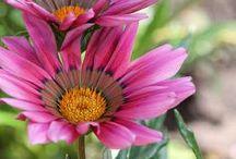 Flower Power / Beautiful, colorful, wonderful dream gardens / by Pamela Lee
