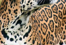 Leopard Time! / everything leopard, cheetah, ocelot, or big cat print. / by VintageousBK