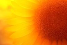 ☀ Here Come's The Sun ☀ / by ♚ Judi ♚ Marash ♚