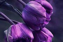 Purple,mauve,lilac and indigo