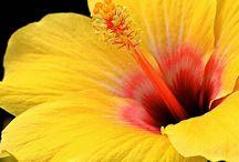 Mellow yellow..... / Amarelo