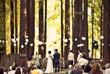 wedding / by Vidya Vasu-Devan