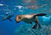 Galapagos.  / by Jill Plotke