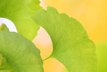 Eye Candy - Lemon & Lime / Yellow and green lovelies / by Cindy Pestka