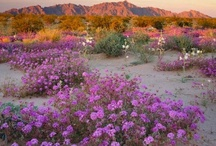 Beautiful Arizona / by Diana Mason