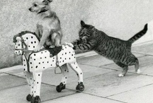 Animal Humor and Inspiration / by Shirley Nelson Marandi