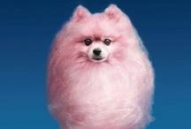 cute fuzzy thangs