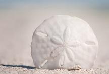 Shells / Shells, Seashells