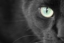 Black Catz! / Pictures and things black cat related :)