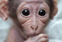 Monkey Mayhem / All things monkey and apish