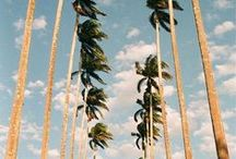 {get your palm springs on} / all things Palm Springs inspired. . .