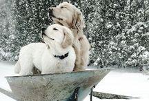 Just ... Winter !
