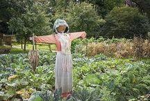Scarecrow Garden / by Linda Watkins