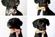 Vores hund :-)