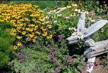 Pollinator Garden /   / by Linda Watkins