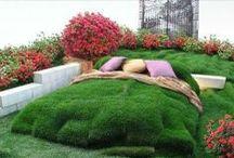 Flower Beds / by Linda Watkins