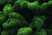 COLOR! :: Emerald  / - Chartreuse - Forest