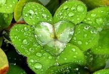 St. Patrick's Day Green & White