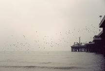 Brighton / by emzoloves