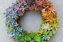 Wreaths / Ideas for DIY wreaths - from living wreaths to craft wreaths.
