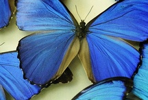Papillon / by emzoloves