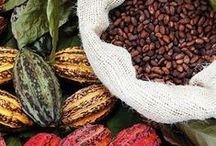 Cocoa Power / Organic, fair trade cocoa, cacao and chocolate