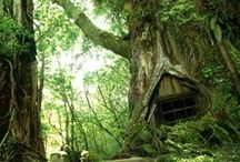 Tree houses & hiding places