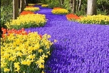 Gardens / For those of us who love gardens, gardening, and flowers.