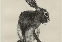 Illustration // Animal / by emzoloves