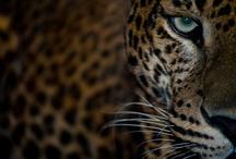 Animal Photography / by Tara McGregor