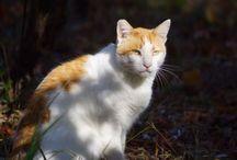 Here Kitty Kitty / Cats, Kittens and Kitties.