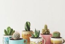 Cactus. Cacti. Succulent Gardens. How to Grow Succulents / Succulents, cacti, cactus pots, and southwest inspired decor. Tips for growing succulents, how to plant succulents, cactus gardens, and cactus planters. Low-water arid climate gardening in backyard, pots, and interior house plants featuring succulents and cacti.