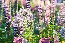 Garden ideas / by Katie Lake