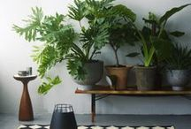 Home Inspiration / by Victoria Yarnish