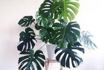 Plants that live inside
