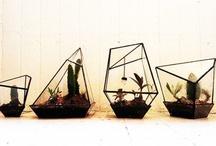 botany/ecology
