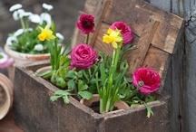 Piha- ja puutarha - Gardening