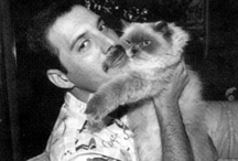 StarGatto / Celebrities and their loved cats.
