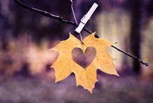 Fall Weddings / Todo para las bodas de Otoño Ideas for Fall Weddings