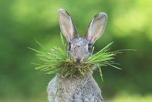 """""""cute animals"""" / awwwww / by Debi Olson"""