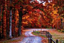 Fall Into The Season / My favorite season of the year