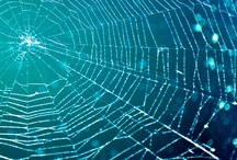What A Wicked Web We Weave