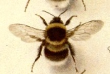 Bees and such / by Ann Thurmond