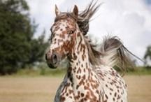 Horses / by Ann Thurmond