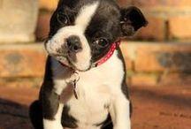 Dog Lover Here! / by Jami Behrens Radant