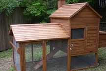 homes for chooks / one of the best loved birds and what they should be living in for their strenuous afforts
